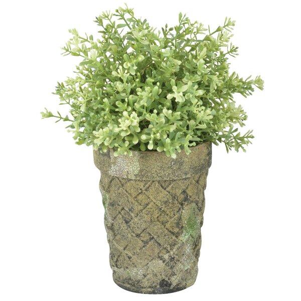 Aged Ceramic Long Tom Pot Planter by EsschertDesign