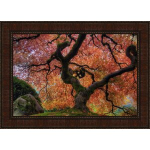 Turning Japanese Maple Framed Photographic Print by Tangletown Fine Art