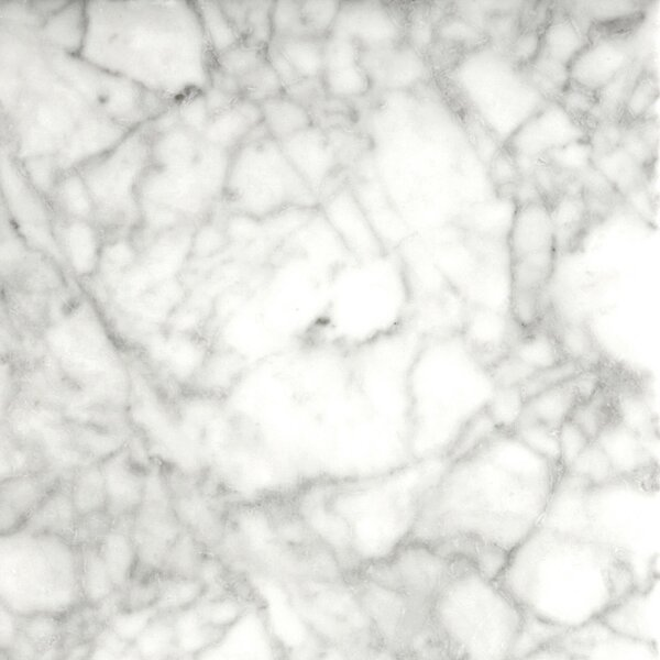 Marble 12 x 12 Field Tile in Bianco Gioia Honed by Emser Tile