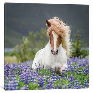 Trotting Icelandic Horse II, Lupine Fields, Iceland Photographic Print on Wrapped Canvas by East Urban Home