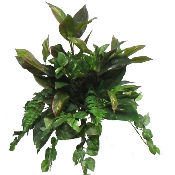 Cordyline Fern Mixed Floral Arrangement by Charlton Home