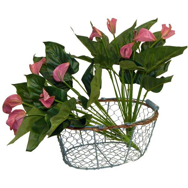 2 Piece Anthurium Calla Lilies Floral Arrangement Set by Ophelia & Co.