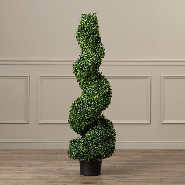 Boxwood Spiral Topiary in Pot by Darby Home Co