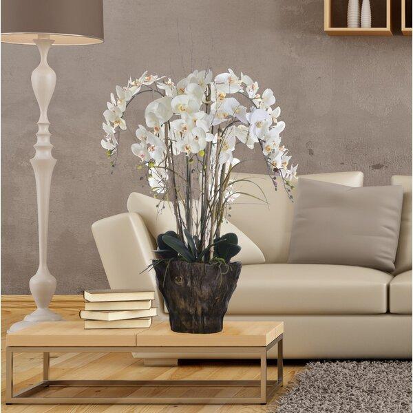 Orchids Floral Arrangement in Pot by Bayou Breeze