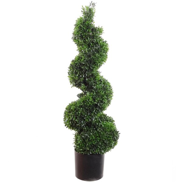 Sprial Topiary Boxwood in Pot by Larksilk