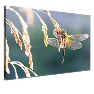 Dragonfly Wall Art On Canvas