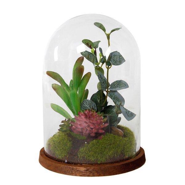 Glass Cover Desktop Succulent Plant by Gracie Oaks
