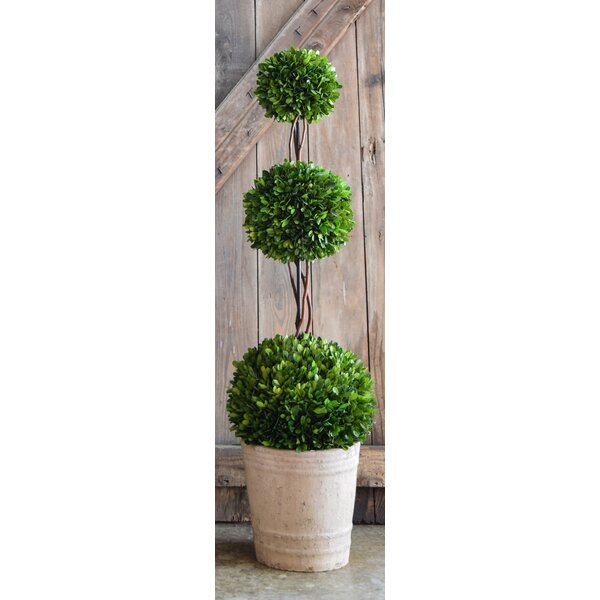 40 Topiary Triple Ball Tree in Pot by One Allium Way