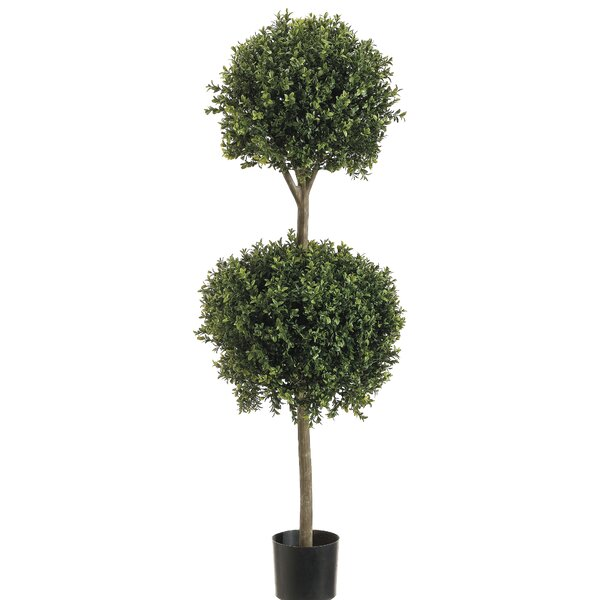 Ball Boxwood Top Topiary in Pot by Darby Home Co