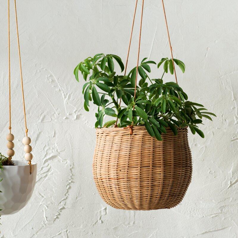 Hanging Light With Planter: Bungalow Rose Milania Rattan Hanging Planter & Reviews