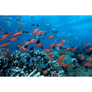 Allyn Ocean Fish Coral Reef Photographic Print on Wrapped Canvas by East Urban Home