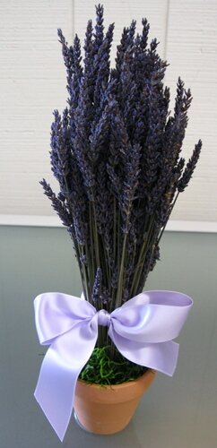 Lavender Pot Planter by From the Garden