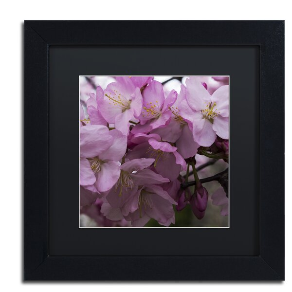 Cherry Blossom Cluster Framed Photographic Print by Alcott Hill