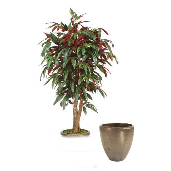 Capensia Tree in Planter by Distinctive Designs