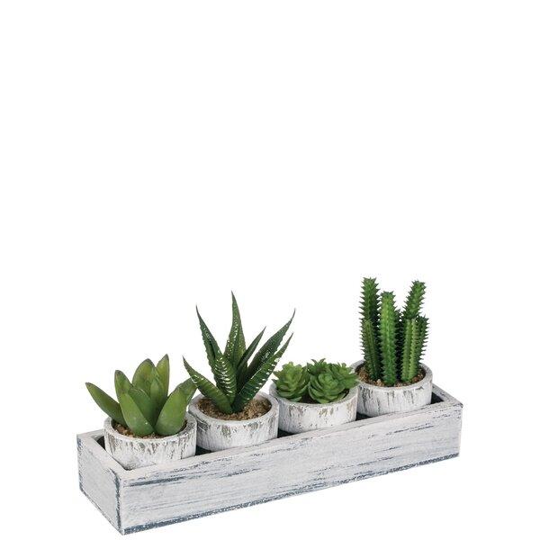 4 Piece Cactus Desktop Plant in Tray Set by Gracie