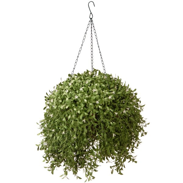 Argentia Hanging Plant in Basket by National Tree Co.