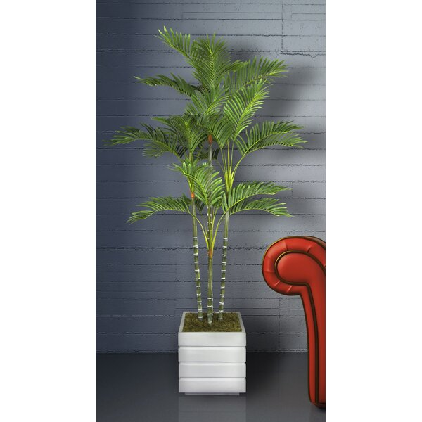 Tall Palm Tree in Planter by Bloomsbury Market