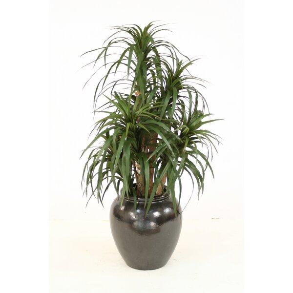 Dracaena Marginata Tree in Planter by Distinctive Designs