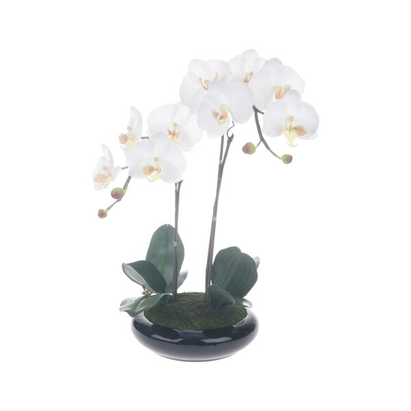 Phalaenopsis 23.25 x 13.75 Centerpiece with Base by Red Vanilla