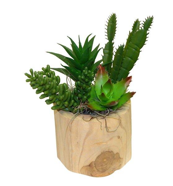 Succulent Garden in Wooden Vase by Wrought Studio