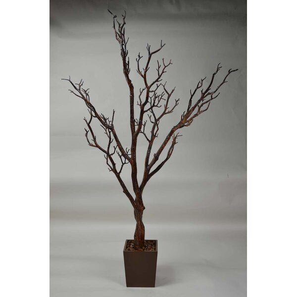 Manzanita Tree in Pot by GT DIRECT CORP