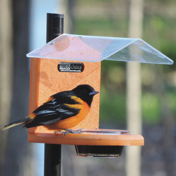 Recycled Jelly Oriole Tray Bird Feeder by Birds Choice
