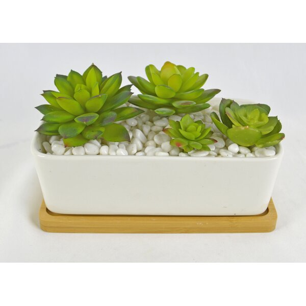 Desktop Succulent Plant in Pot by Wrought Studio