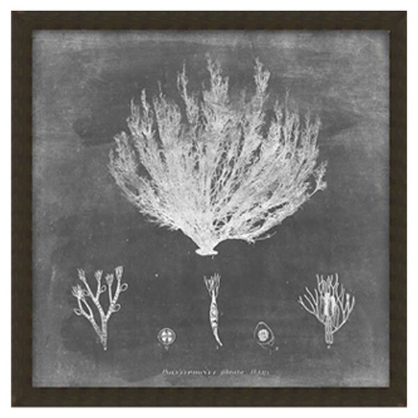 Coral I Framed Print of Painting by PTM
