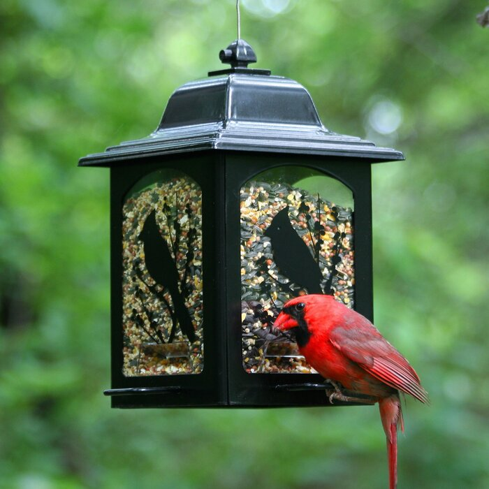 Birds & Berries Lantern Hopper Bird Feeder