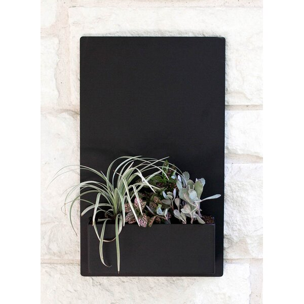 East Side Steel Wall Planter by Urban Mettle