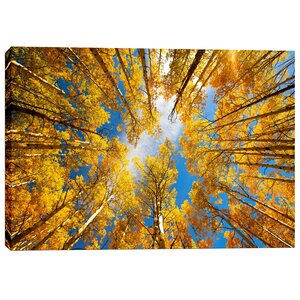 Towering Aspens by Darren White Photographic Print on Wrapped Canvas by Cortesi Home