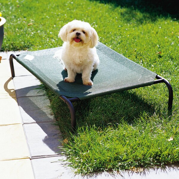 Elevated Indoor/Outdoor Pet Cot for Small Breeds by Coolaroo