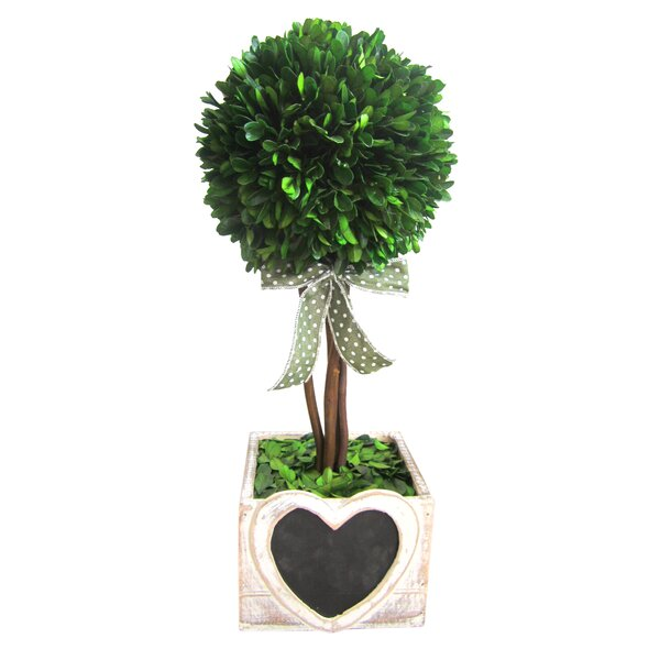 Preserved Boxwood Topiary in Decorative Vase by Jeco Inc.