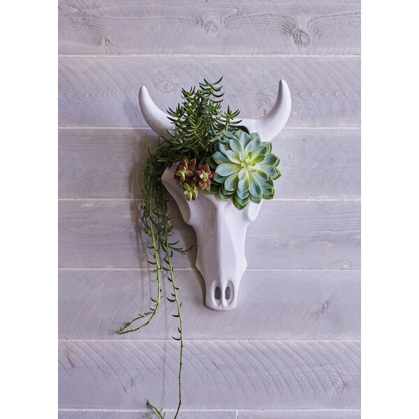 Ceramic Skull Wall Planter by Easy, Tiger
