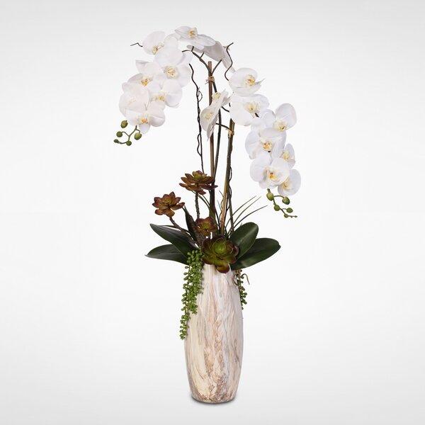Phalaenopsis Orchid Floral Arrangement in Vase by Latitude Run