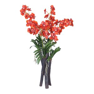 Buy Vanda Orchid Flower and Foliage in Vase!