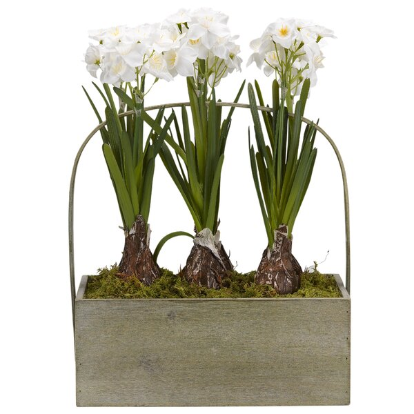 Paperwhite Bulbs Rectangle Wooden Flowering Plant in Planter by Red Barrel Studio
