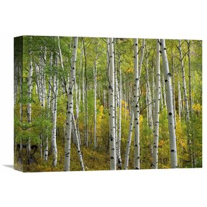 Nature Photographs Aspen Trees in Fall, Colorado by Tim Fitzharris Photographic Print on Wrapped Canvas by Global Gallery