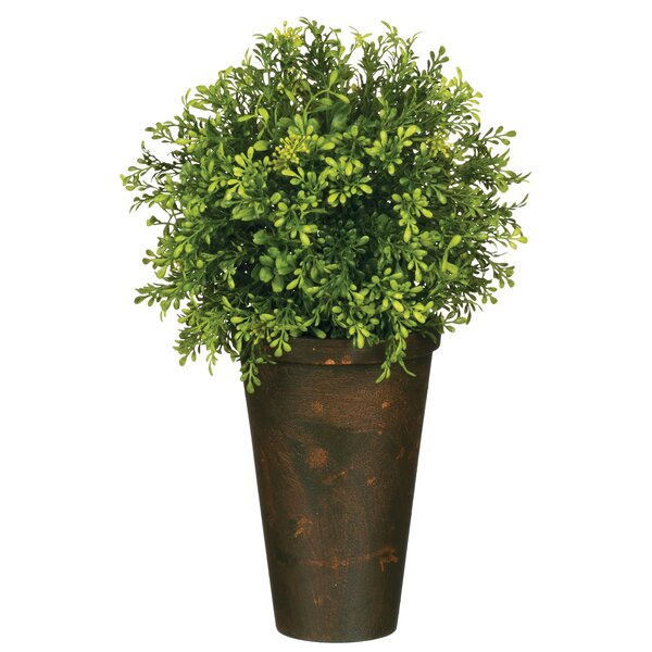 Tealeaf Berry Foliage Topiary in Pot by Gracie Oaks