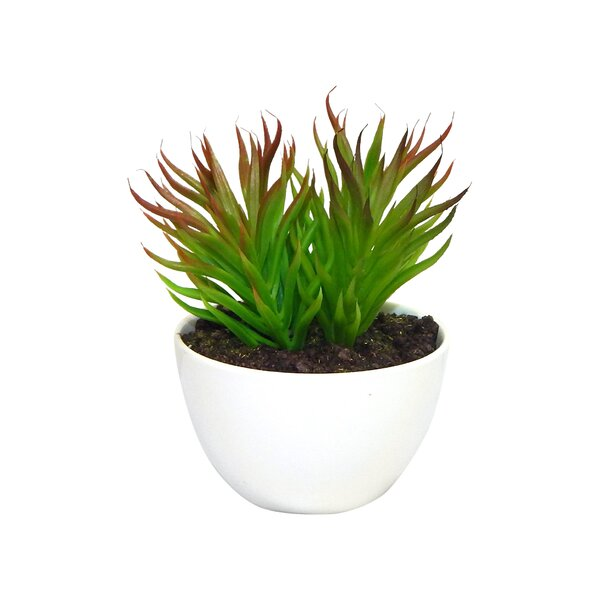 Minimalist Arrangement Desktop Succulent Green Plant in Planter by Ebern Designs