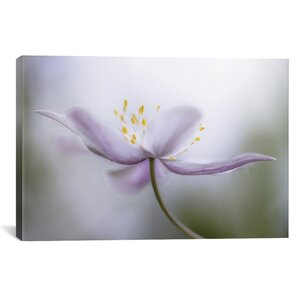 'Nemorosa' Photographic Print on Wrapped Canvas by Ophelia & Co.