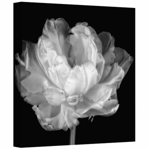 Tulipa Double Black and White I Painting Print on Wrapped Canvas by Zipcode Design