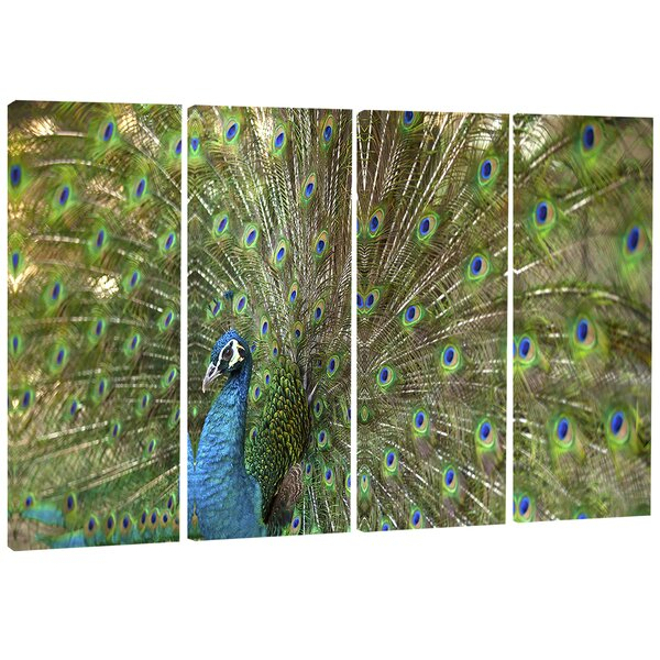 Beautiful Peacock with Feathers - Animal 4 Piece Photographic Print on Wrapped Canvas Set by Design Art