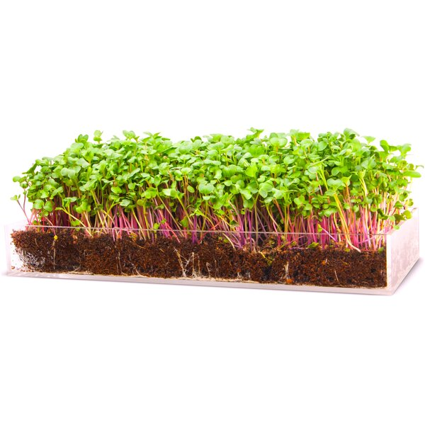 Serve Microgreen Growing Kit by Window Garden