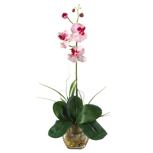 Mini Phalaenopsis Silk Orchid Flower in Pink White by Nearly Natural