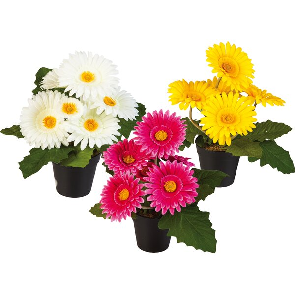 11 Potted Daisy Plant (Set of 3) by Winston Porter