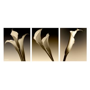 '3 Lillies' 3 Piece Photographic Print on Wrapped