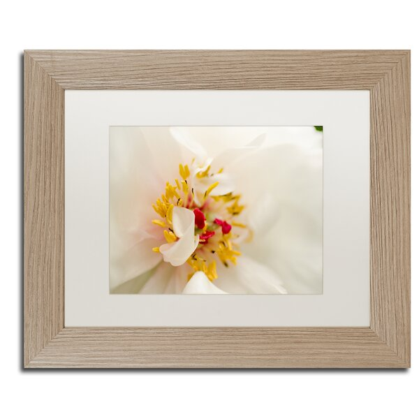 Eye of Peony Framed Photographic Print by Trademark Fine Art