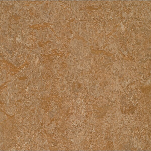 Marmoleum Click Cinch Loc 11.81 x 11.81 x 9.9mm Cork Laminate Flooring in Brown by Forbo