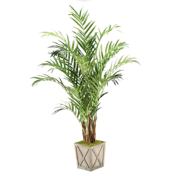 Kentia Palm Floor Plant in Planter by Bay Isle Home